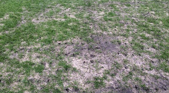 Пышкин: густота газона ниже 70% — не причина отменять матч «Урал» – «Локомотив»
